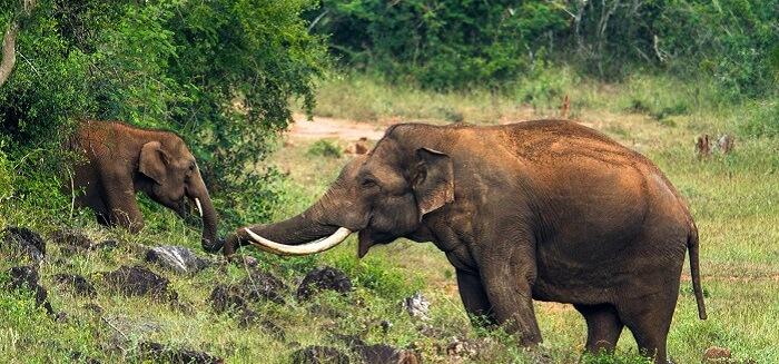 Elephants playing at the Neyyar Wildlife sanctuary