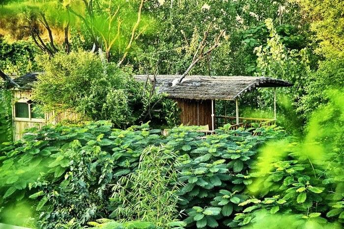 A tree top cottage on a keekar tree at Tree House Resort