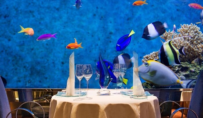 The restaurant featuring 4000 marine species that the customers can watch as they dine
