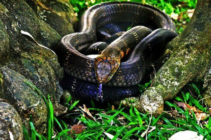 A snake curled up in the Bannerghatta National Park in Bangalore