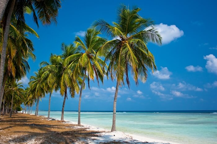 Palm lined beaches make for good vantage points to take in the beautiful landscapes of Lakshadweep