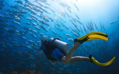 Diver with school of fishes