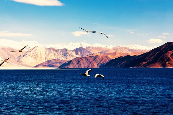 Have an adventurous trip to Ladakh and visit the Pangong Lake