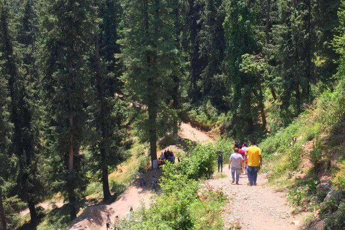 Trekking- one of the best things to do in Mashobra