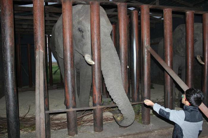 Shreyan visiting the zoo