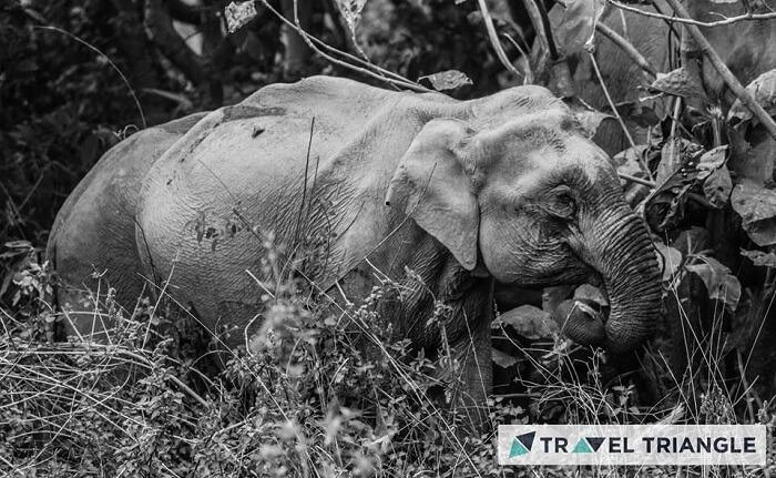 Elephant spotted in Jim Corbett