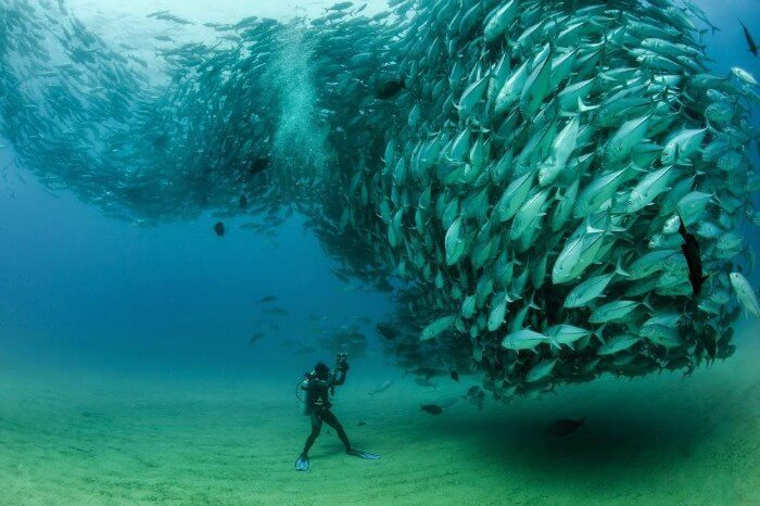 A diver taking pictures underwater in Sihanoukville, Cambodia