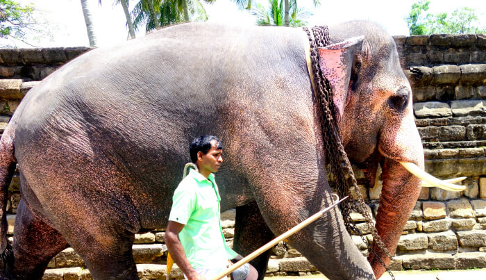 Elephant Ride in Yala National Park