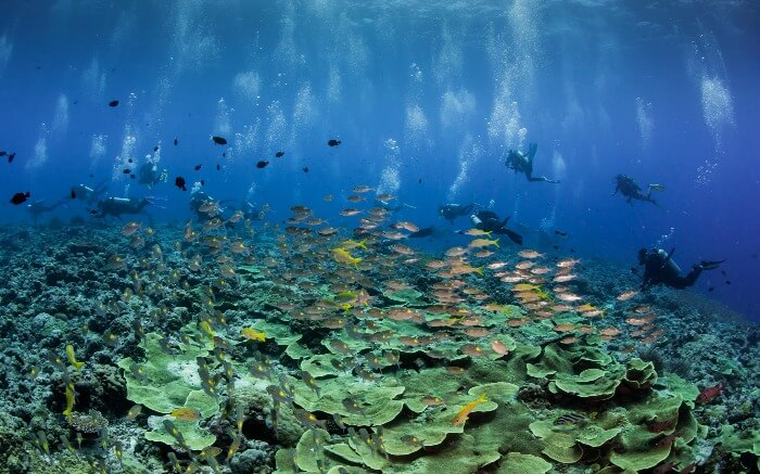 The Blue Corner Wall in Palau is a great site to spot a number of aquatic animals and is one considered one of the sea wonders of the world.
