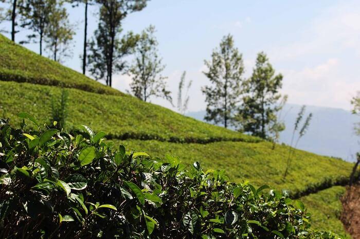 The beauty of Kandy in Sri Lanka