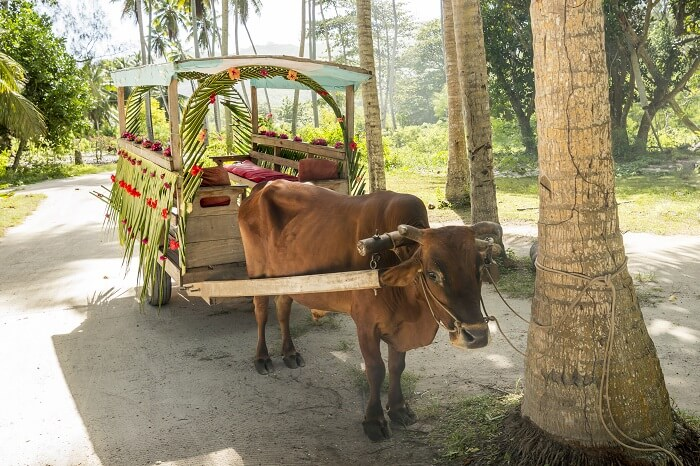 Ox cart for people transportation in La Digue Island
