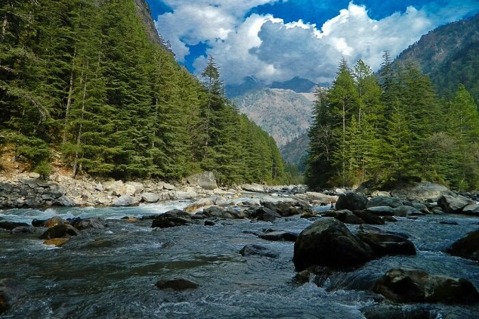 A snap of the Parvati River and the surrounding trees in Kasol