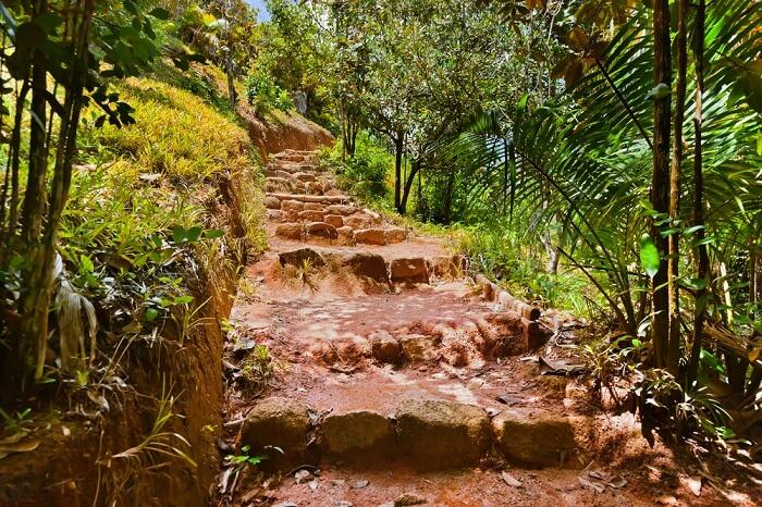 Pathway in the jungle of Valle de Mai on Praslin island