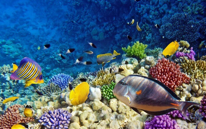 Over 1000 species of fish and 400 types of coral reefs can be found in the Northern Red Sea.