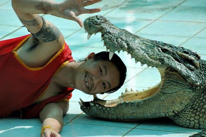 A performer poses with his head inside the mouth of a crocodile in Koh Samui