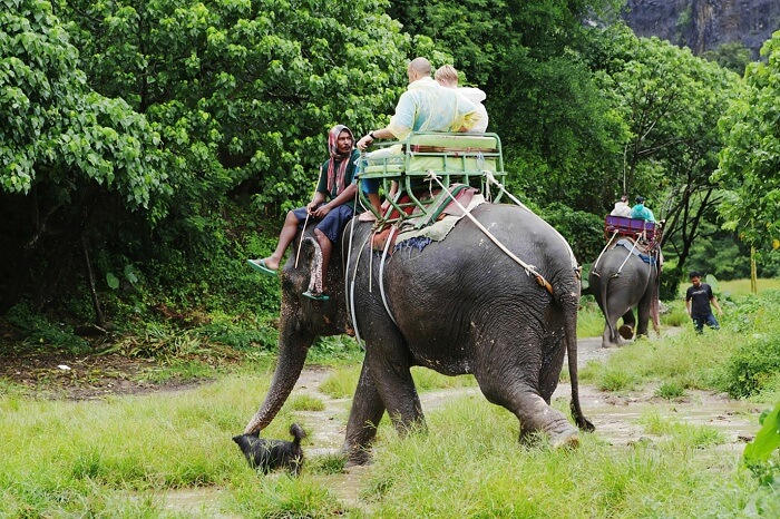 Tourists go on elephants trekking in the rain