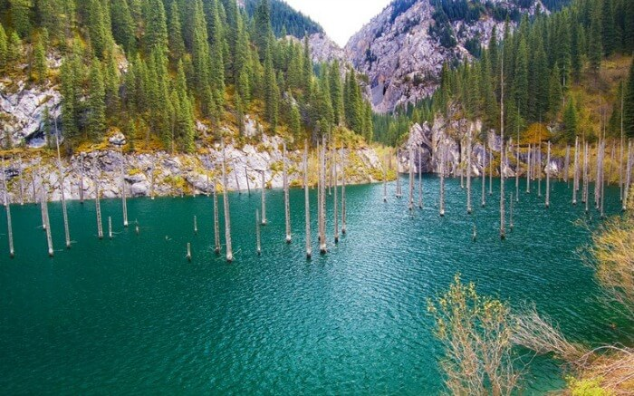 Large masts of spruce trees rise above Lake Kaindy in Kazakhstan.