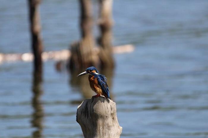 Capturing a rare moment in Sri Lanka