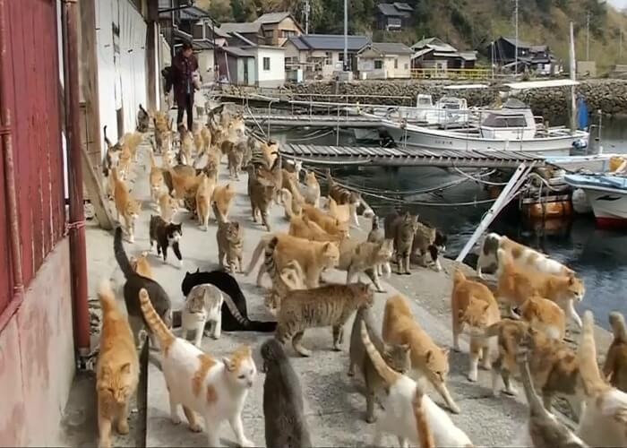 Get ready to spot thousands of cats at this strange place