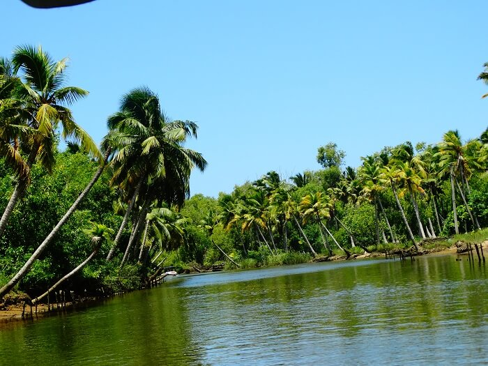 Beautiful safari in Poovar Kerala