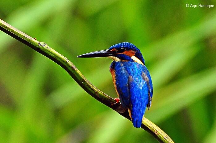 A hummingbird sitting on a tree branch at the Thattekad Bird Sanctuary