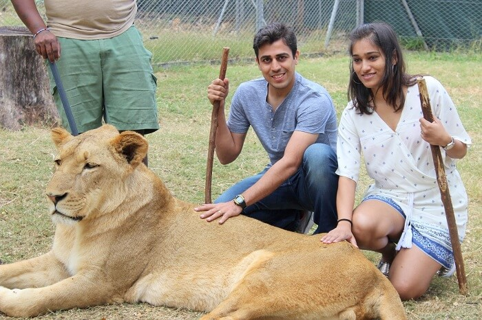Sumit and his wife doing Interaction with lions in Mauritius