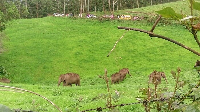 Flocks of elephants at Elephant Junction