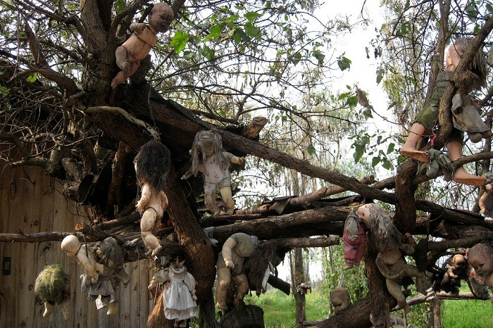 Dolls hanging on the trees of the Island of Dolls in Mexico