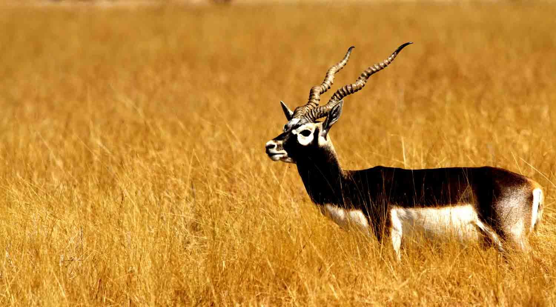 Enjoy your adventures at Kanha National Park