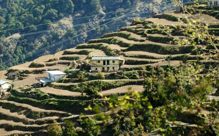 Terrace Potato Farm in Dhanaulti is an unusual sightseeing spot in Dhanaulti