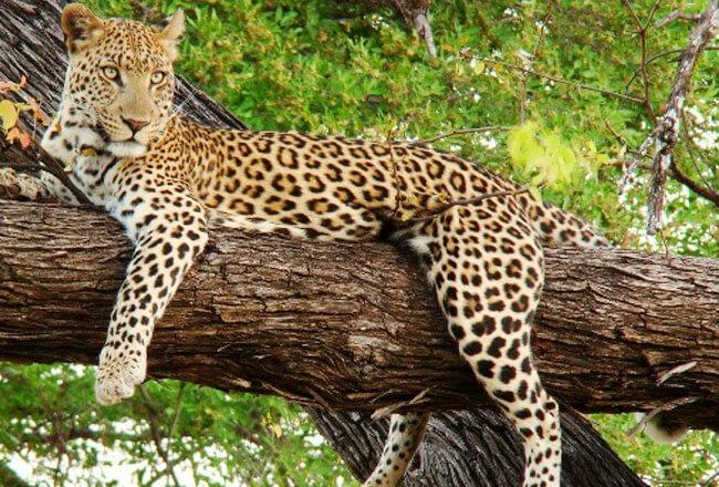 Get ready to spot wild animals