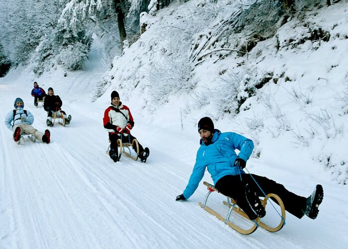 Sledge down the snowy slopes of Manali during snowfall
