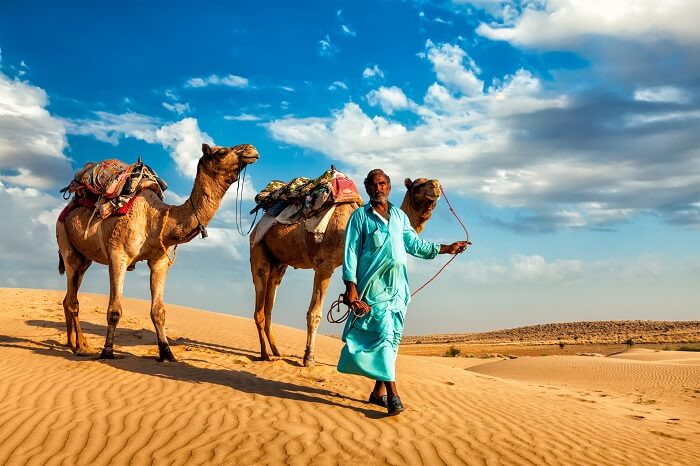 Camels and their escort walking on desert sand in Rajasthan