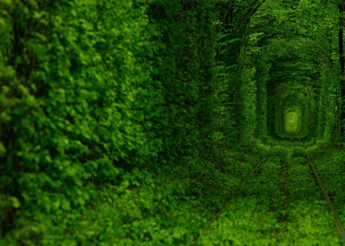 The beautiful view of the Tunnel of love
