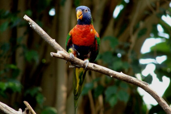 An exotic variety of parrot in Shendurney Wildlife Sanctuary