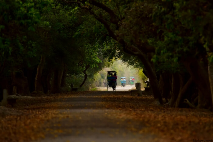 Rickshaw safari at Bharatpur Birds Sanctuary - now Keoladeo National Park