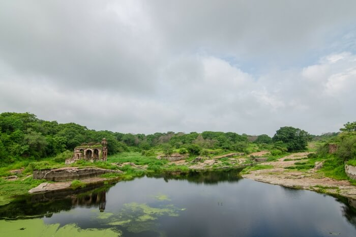 Padam Talao in Ranthambore National Park