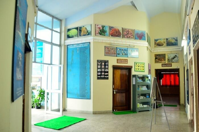 The lobby area of the Zoological Survey of India Museum