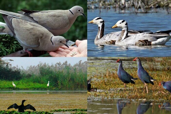 Bakhira Bird Sanctuary, Uttar Pradesh