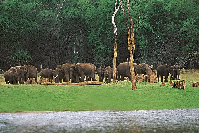Spot elephants at Eravikulam Park