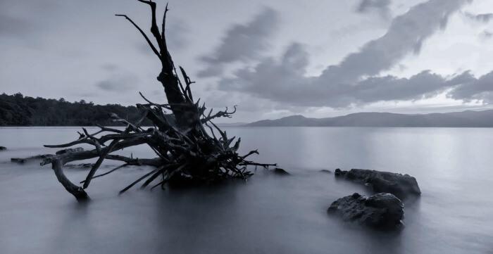 A ravaged tree branch at Munda Pahar beach