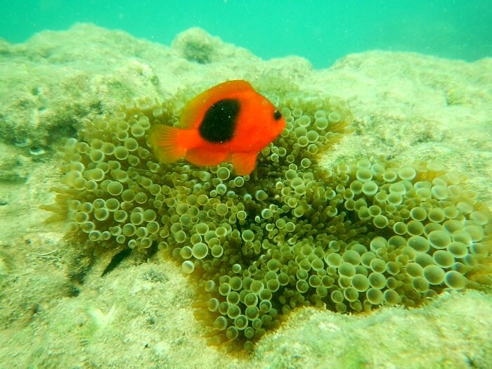 Marine life in Havelock