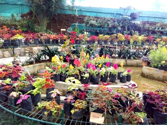 Variety of Flowers in Flower Exhibition