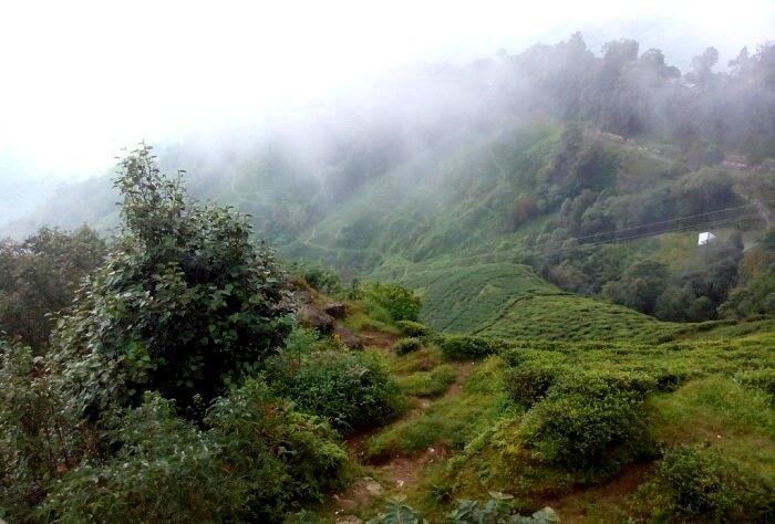 Mist covered hills of Darjeeling