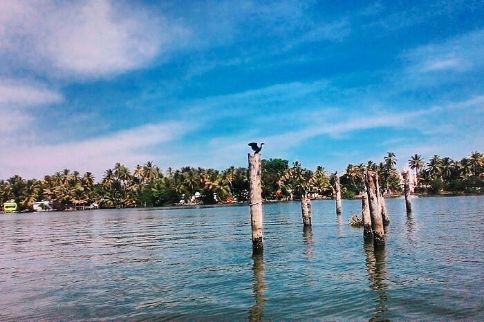 A shot of the lake Kayamkulam Kayal and the banks taken from a boat on the lake