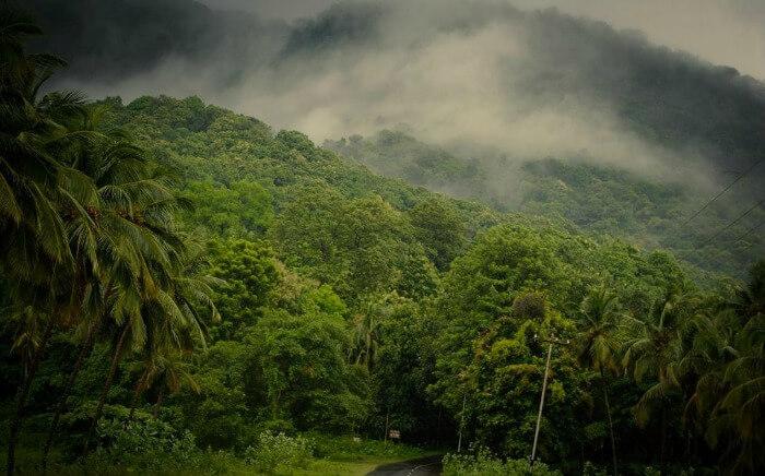 The misty roads of Nelliyampathy