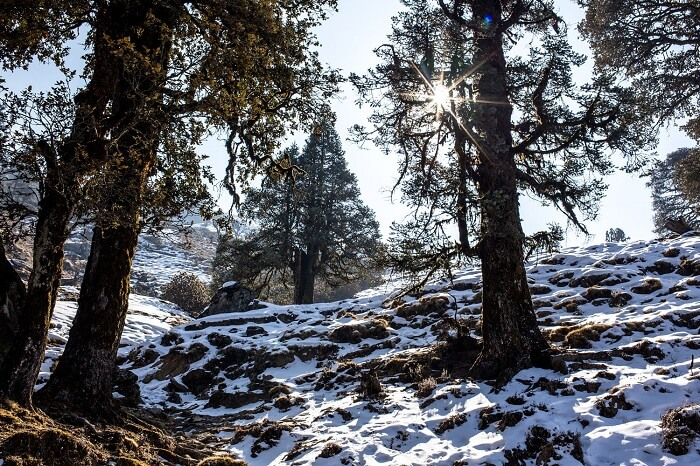 Snowclad path to Tungnath temple in chopta