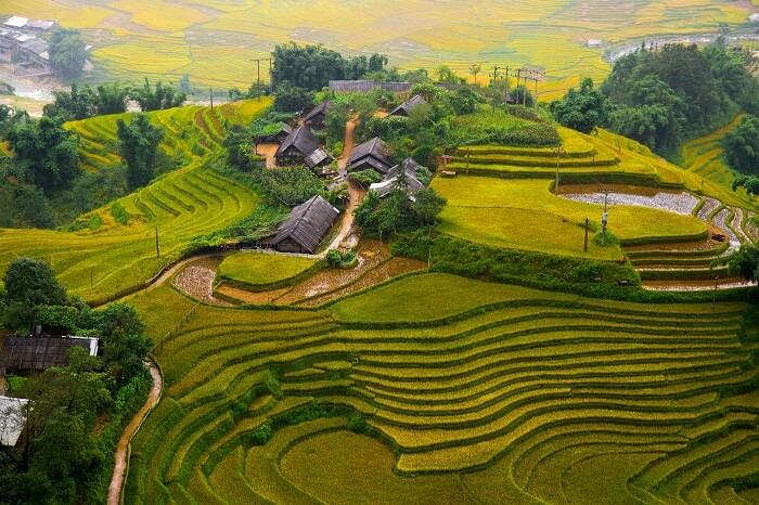 An aerial view of the beautiful terraced rice field of Sapa