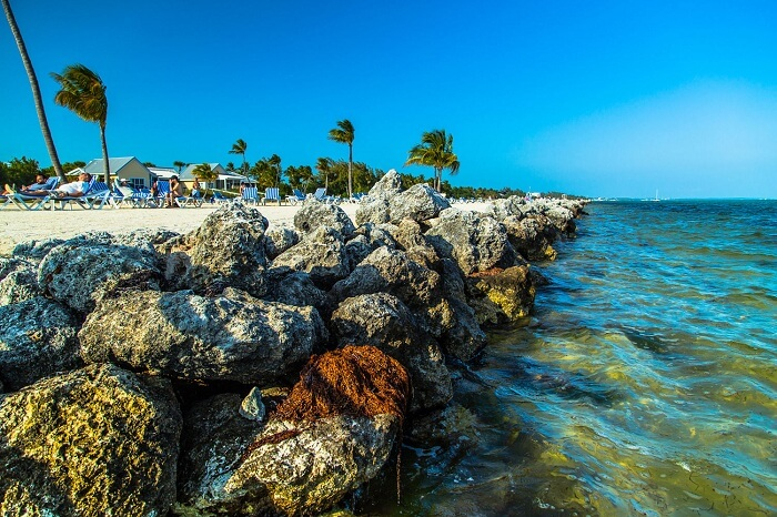 The rocky edge of the beach in Islamorada