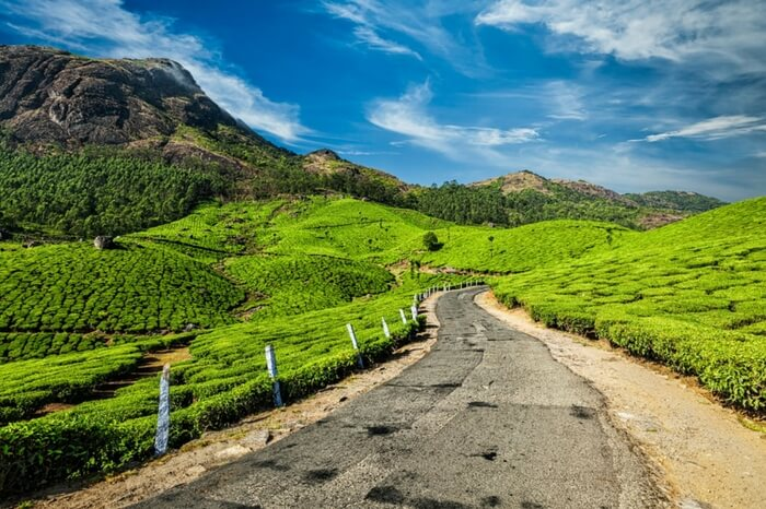 Road through tea plantation in Munnar